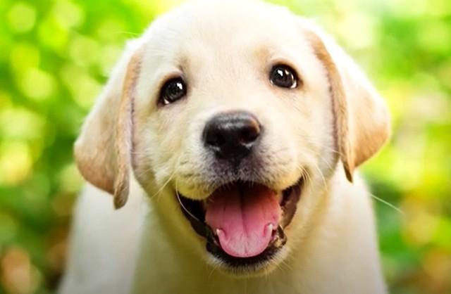 К чему снится белая собака: полное толкование по сонникам