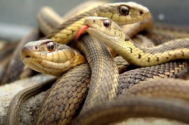 К чему снится желтая змея: подробное толкование по сонникам