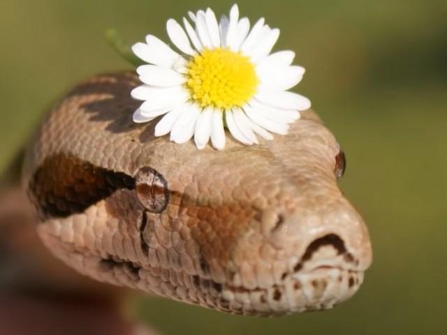 Укусила змея во сне за руку: подробное толкование по сонникам
