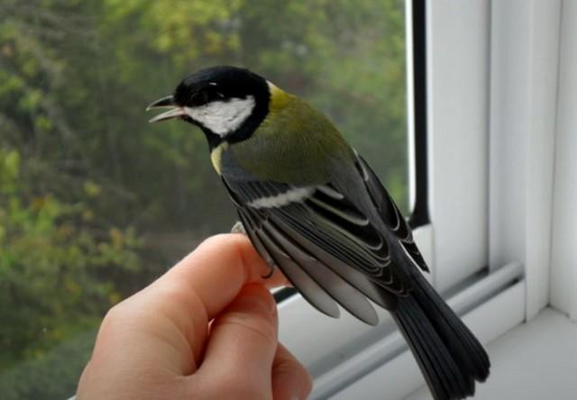 К чему снится птица в руках во сне для женщины