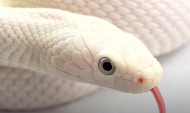 К чему снится змея во сне мужчине: подробное толкование по сонникам